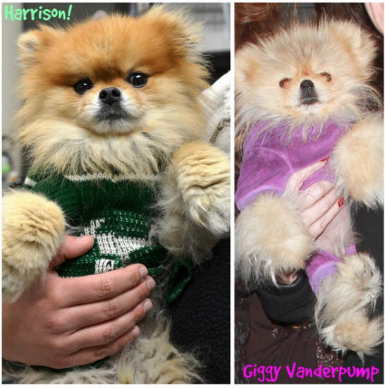 harrison-lisa-vanderpump-new-pom