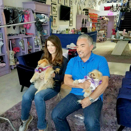 Vanderpump Dogs